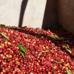 Peruvian Penachi Coffee