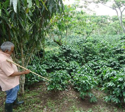 Nicaragua – Finca El Recreo Estate