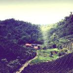 Nicaragua – Sajonia Estate SHG