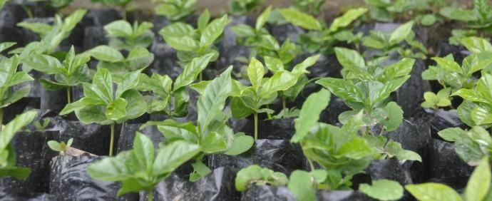 Ecuador Ivan Torres – New Coffee Arrival