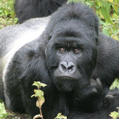 Dem. Republic of Congo
