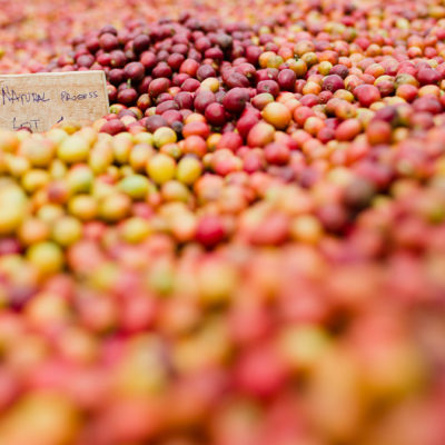 Burundi Mutana Hill – Special Reserve Lot 3 – Natural Processed Micro Lot