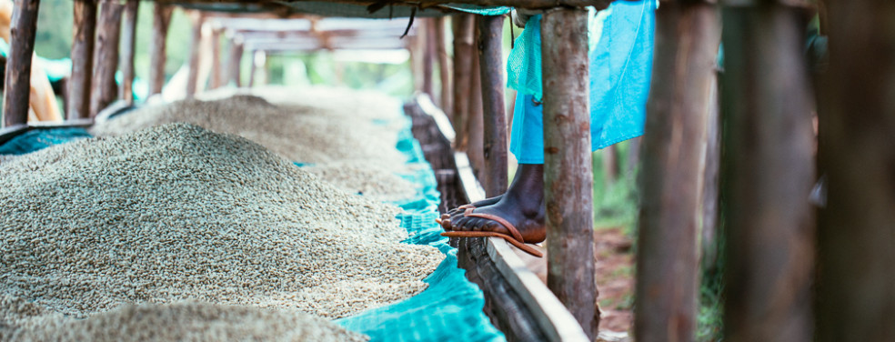 Burundi Mutana Hill – Special Reserve Lot 5 – Fully Washed Micro Lot